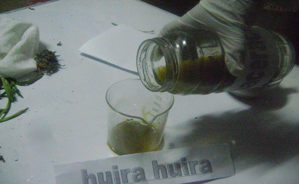 Elaboracion de oximielito a base de huira huira para tratamientos respiratorios